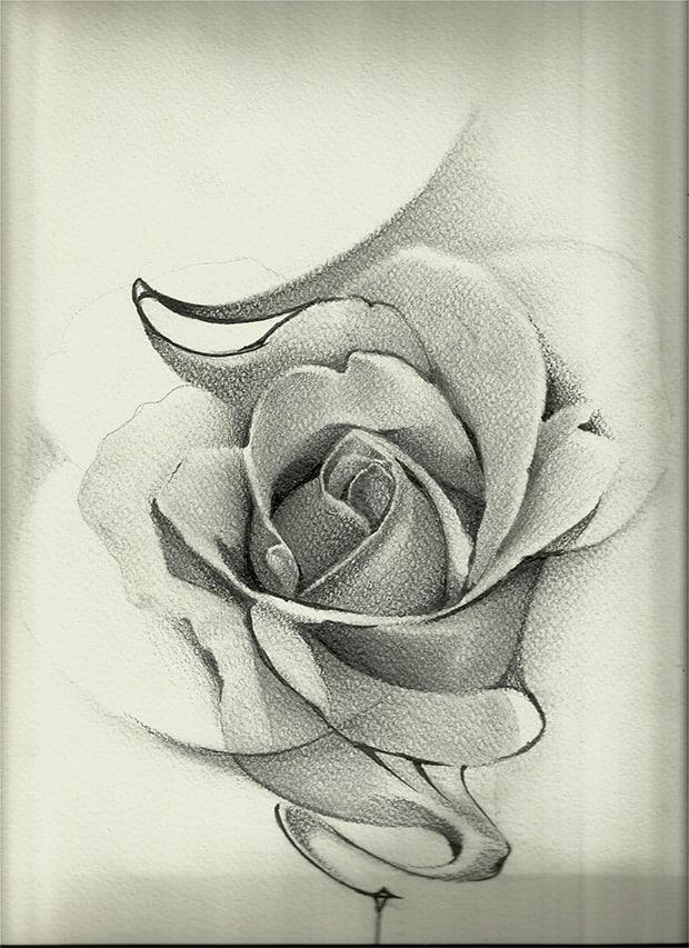 Giulio Canepa Art Sketch Rosa