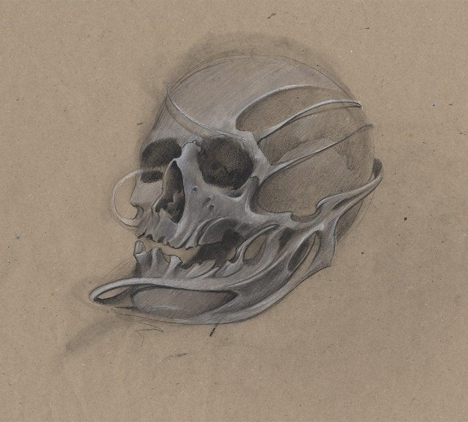 Giulio Canepa Art Sketch Skull Teschio Flow